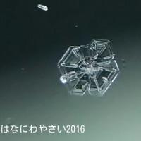 詰まった結晶