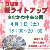 1日限定!桜ライトアップ ~さむかわ中央公園~