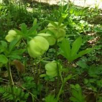 5月の終わり     庭の花