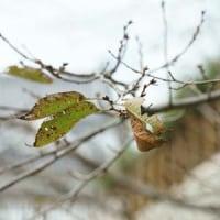 急に秋? 10月23日(日)曇り