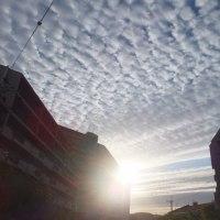 見上げた空は鰯雲