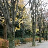 公園散策と29(にく)の日