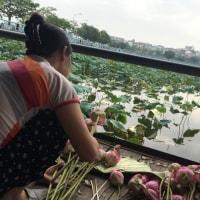 【ハノイ・タイ湖周辺にて〜ハスの花摘み&ロータス茶作り】