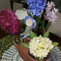 我が家の花たち+テレビ