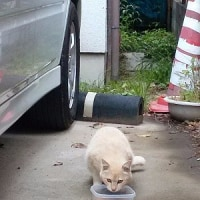 寄居町の新たな妊娠猫