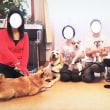 Dog Yoga教室、参加者募集中!(おうちCafeわんこ堂)