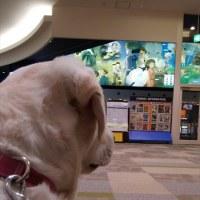 久し振りに映画を観に行って来ました。