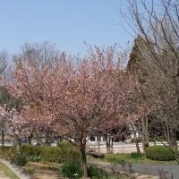 春の息吹を感じて・・・2017年春公園散歩(1)