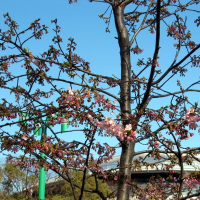 2月19日(日)・6日振り散歩