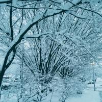 またまた大雪ですが⛄