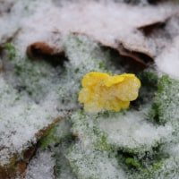 うっすらの雪の遊び