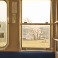 西藤原駅の桜(車内から)