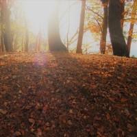 秋冬色の丘より。