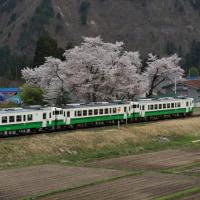 会津中川の桜
