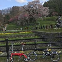 奈良、花見。