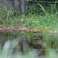 箕面記念の森公園・・小鳥たち