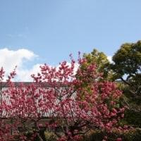 桜前線スタート間近