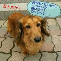 ♪‥くちゃ〜いの大好きでちゅ〜!(*>_<*)ノ