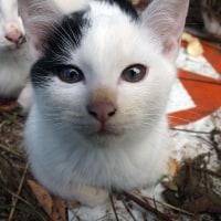 比治山の猫221