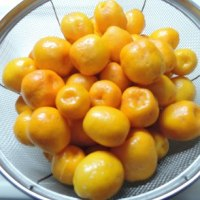 柑橘類は・・・