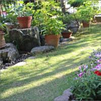 庭の花 5月27日