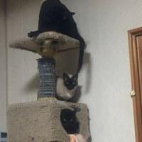 猫タワーの写真2つ