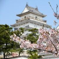 島原城の桜 ~8日ぶりの晴天下で鮮やかに~