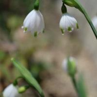 ●我が家の3月の花(13)ミラーレスEOSM3のバリアングルで