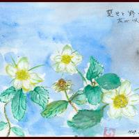 楚々と野いちごの花が咲いている