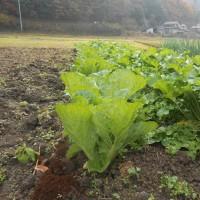 緑黄色野菜と言えば ホウレンソウでしょう?