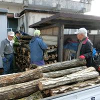 椎茸の原木伐採