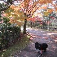 秋の公園は楽しかったです♪