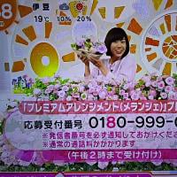4/24・・めざましテレビお花プレゼント本日2時まで