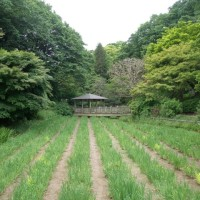 ばら苑(生田緑地)