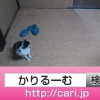 2016/08/30(18:20:34)写真 猫H