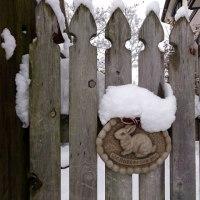 きたぁ! 今季最大の寒波! 積雪20cm!