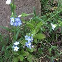 この時期のお庭から(5月)