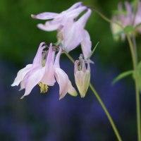 春の花ー2 170428