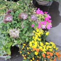 A.97.春の花から初夏の花へ、