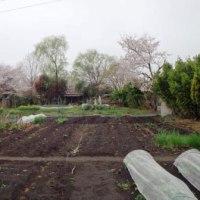 見沼たんぼ福祉農園のホームページがほぼ復元しました。