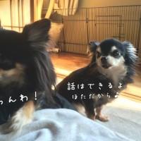 粒ほた劇場・KY編