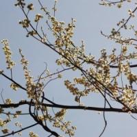 福井市西部・花巡り