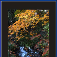 彩秋の流れ