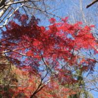 鎌倉紅葉狩りマラニック