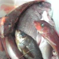 新潟は粟島からお魚が届いた!