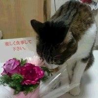 Aくんからもらったお花と、猫ちゃん♪