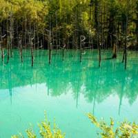 青竹色に染まる池