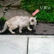 猫サン達②