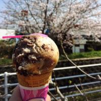 桜とアイスと晴れ