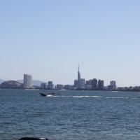 コスモス満開の能古島